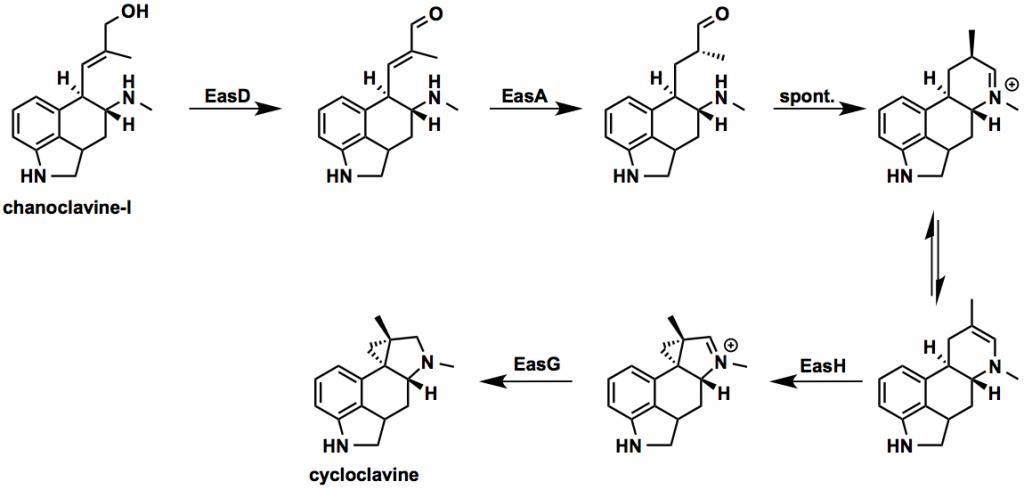 cycloclavine_scheme-1024x490