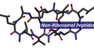非核糖体多肽 Non-Ribosomal Peptide