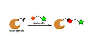 生物共轭(偶联) Bioconjugation