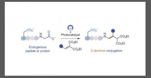 Nat. Chem. 光催化体系的C-末端选择性脱羧型bioconjugation