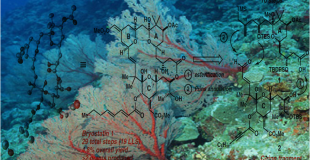 Science 克级合成潜在HIV拮抗剂bryostatin 1及其类似物
