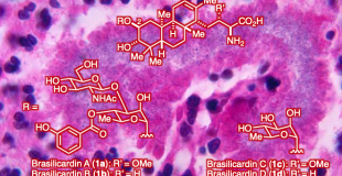 Angew. Chem., Int. Ed. 3次分子内共轭加成实现Brasilicardin的全合成