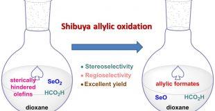 Shibuya烯丙位氧化